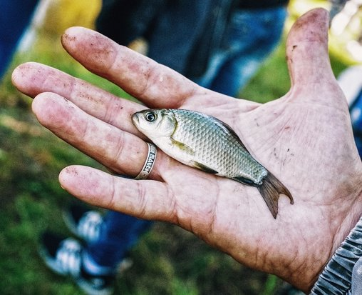 Know what to expect - small fish in a big hand